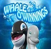 whale o winnings slot rival